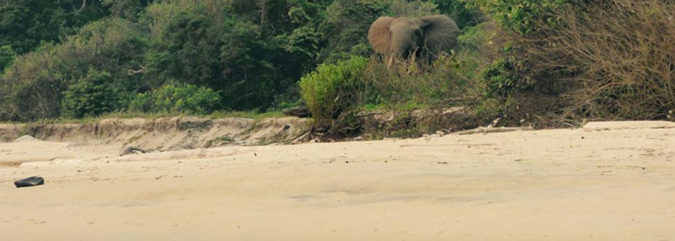 Pongara Beach, Gabon
