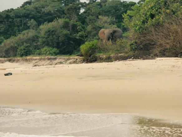 Pongara Beach, Gabon; By Andrew G. Cooper & Orrin H. Pilkey