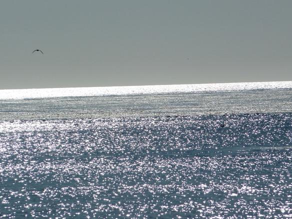 Celebrate June as Oceans Month, USGS
