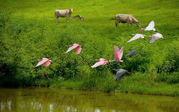 bp-oil-spill-gulf-birds