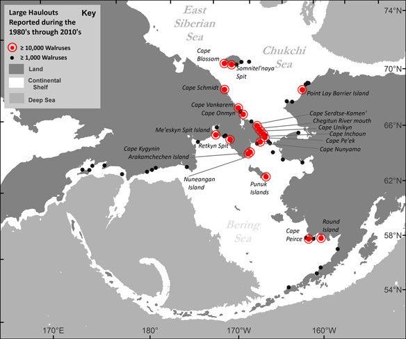 walrus-map