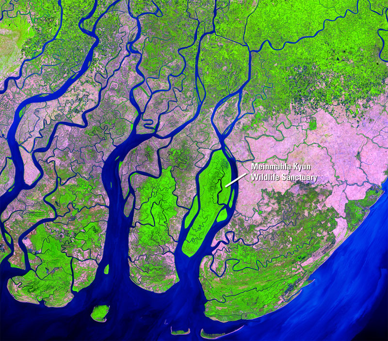 In Myanmar's Irrawaddy Delta, a rapidly disintegrating mangrove forest