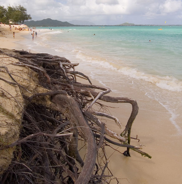 Officials confirm some Kailua Beach Park sand is going to city golf courses