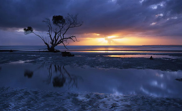 mangrove-queensland