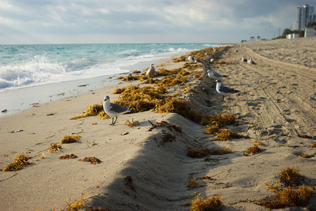 Can Miami Beach Hold Its Ground Against King Tides?