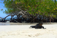 Mangroves worldwide: a global loss of tidal forests
