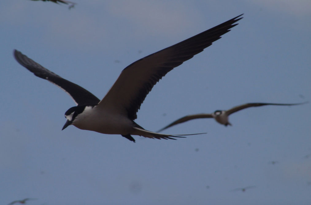 Migratory seabird deaths linked to hurricanes
