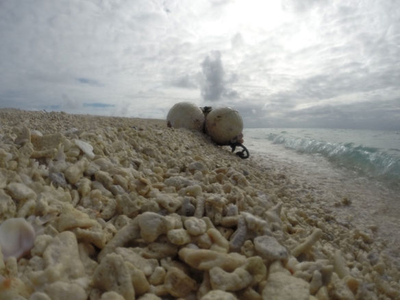 Plastic Pollution | Coastal Care