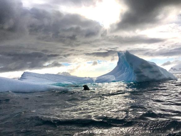 Antarctica; By Denis Delestrac