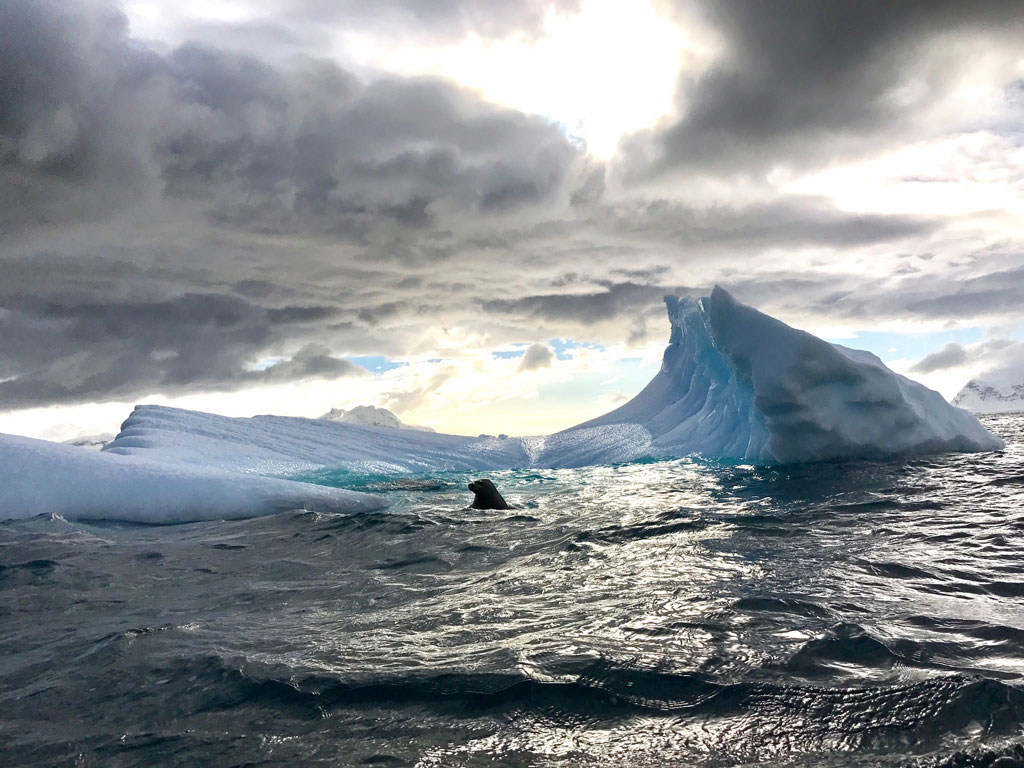 How climate change is impacting Antarctica's ecosystem, Video