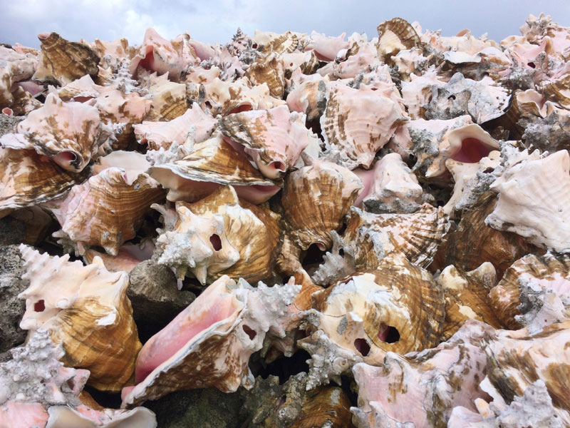 Sea shells: A new source of sustainable biomaterials