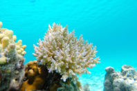Republicans seek to overturn Key West ban on coral-damaging sunscreens