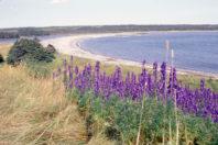 Newfoundland's Sandy Beaches: A Glacial Legacy; By William J. Neal & Joseph T. Kelley