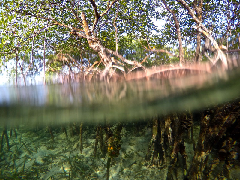 New research identifies 'triple trouble' for mangrove coasts