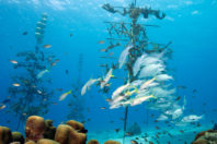 Back from the brink: the global effort to save coral from climate change