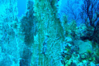Stunning coral forests discovered around Sicily's deep sea volcanoes – in pictures