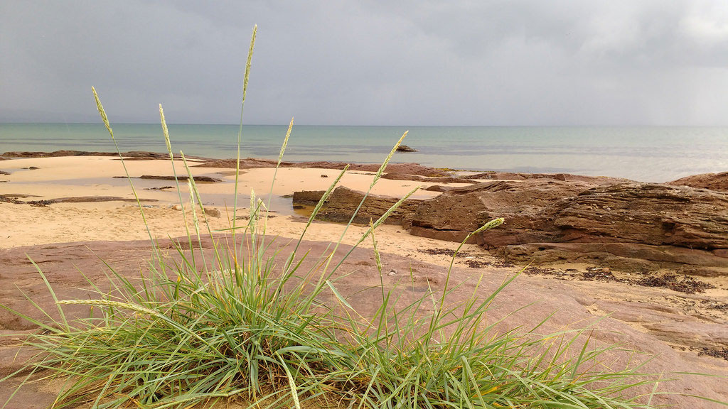 Unspoilt, rare, dunes earmarked for new golf course