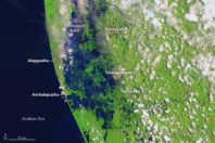 In India, Nature's Power Overwhelms Engineered Wetlands