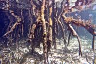 Muddy waters: Exploring mangrove governance in Tanzania
