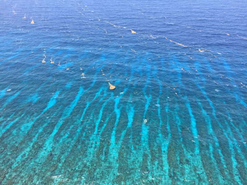 Tracking Sargassum's ocean path could help predict coastal inundation events