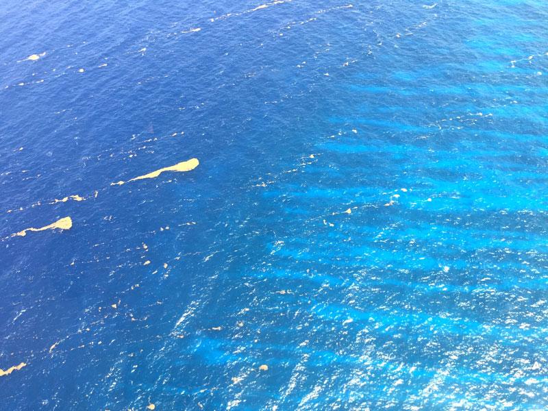 Sargassum: The seaweed deluge hitting Caribbean shores