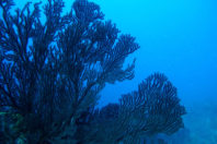 Climate change modifies the composition of reefs