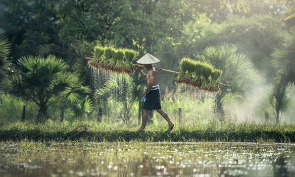 Climate change, rising sea levels a threat to farmers in Bangladesh
