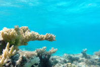 Florida's coral reefs provide window into the past