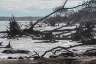 Big Talbot Island's Blackrock Trail; By Cecelia Dailey