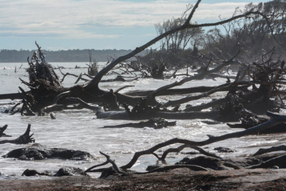 Big Talbot Island's Blackrock Trail; By Cecelia Dailey