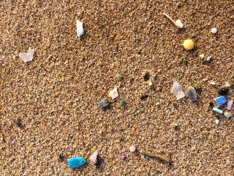 Microplastics affect sand crabs' mortality and reproduction