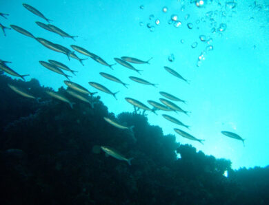 Ocean species are shifting toward the Poles