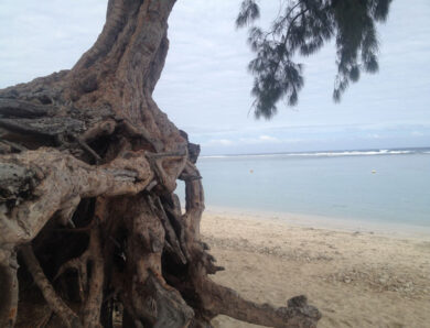 Five trees or a latte? Coastal communities seek help for mangroves