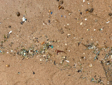 Research reveals microplastic content levels in seafood