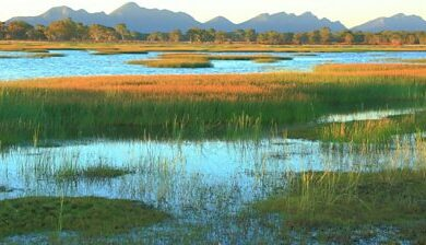 Walker Swamp: The mission to restore an Australian wetland